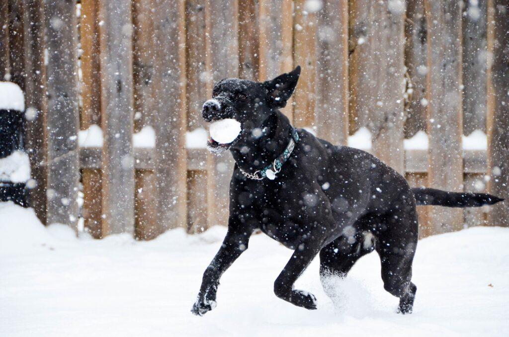 Perro jugando en la nieve